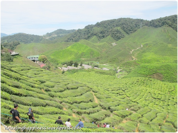 2012_Cameron Highlands